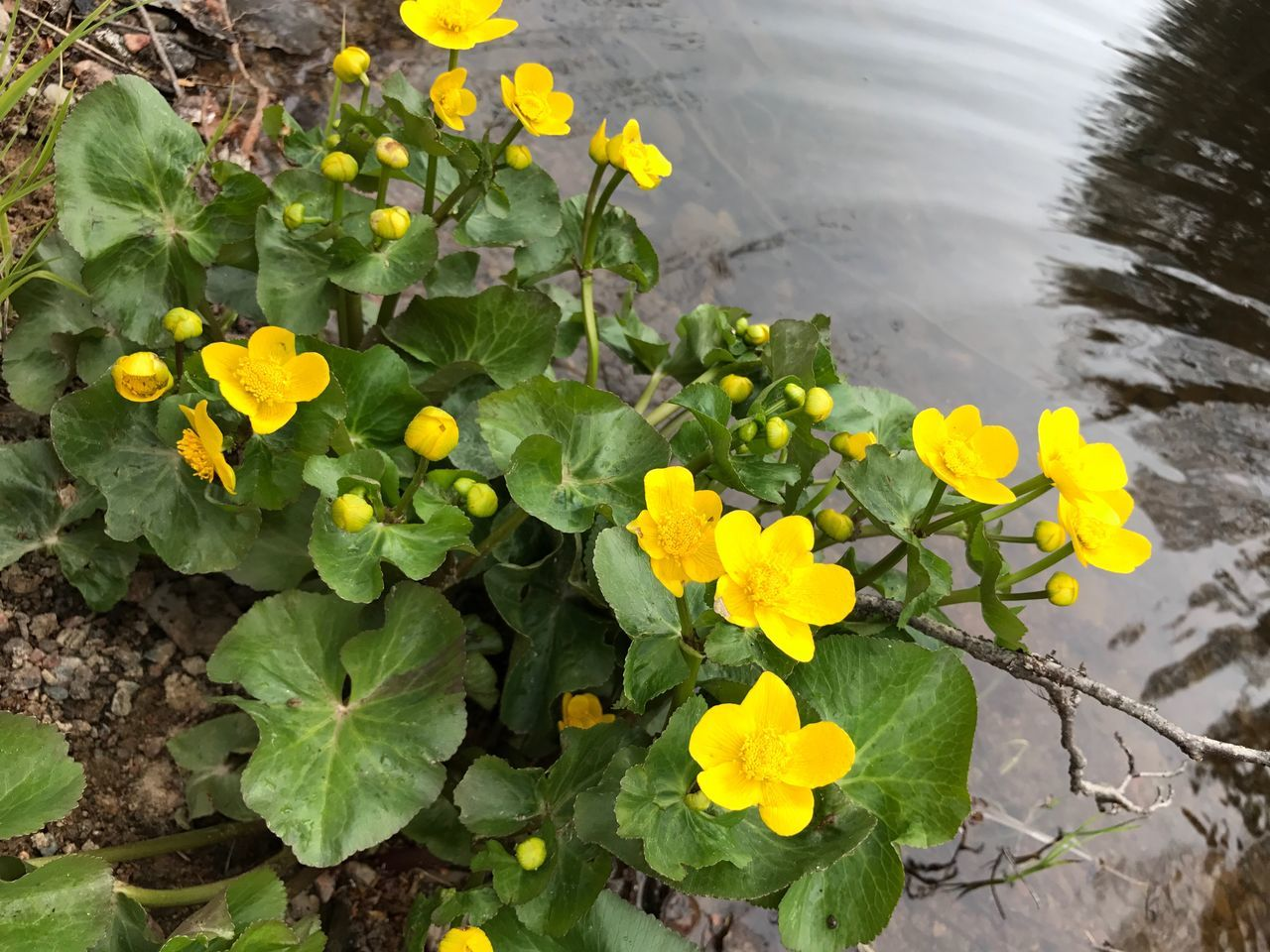 Flower Growth Freshness Petal Fragility Plant Yellow Nature Beauty In Nature Flower Head Outdoors High Angle View Day Leaf Green Color No People Blooming Close-up Water