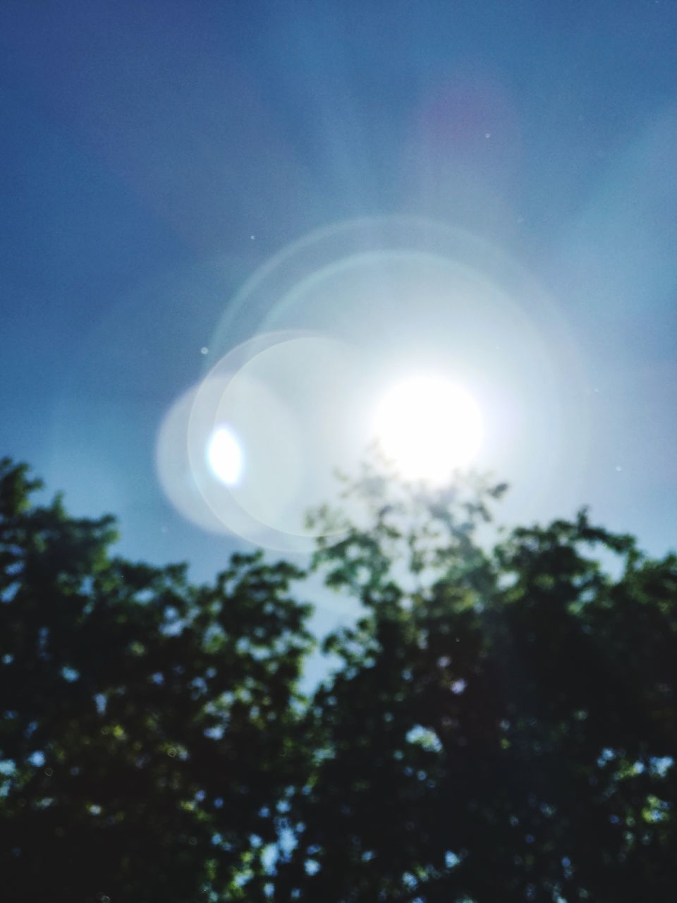 sun, moon, low angle view, lens flare, nature, beauty in nature, tree, no people, sky, sunlight, outdoors, scenics, astronomy, day, solar eclipse, close-up