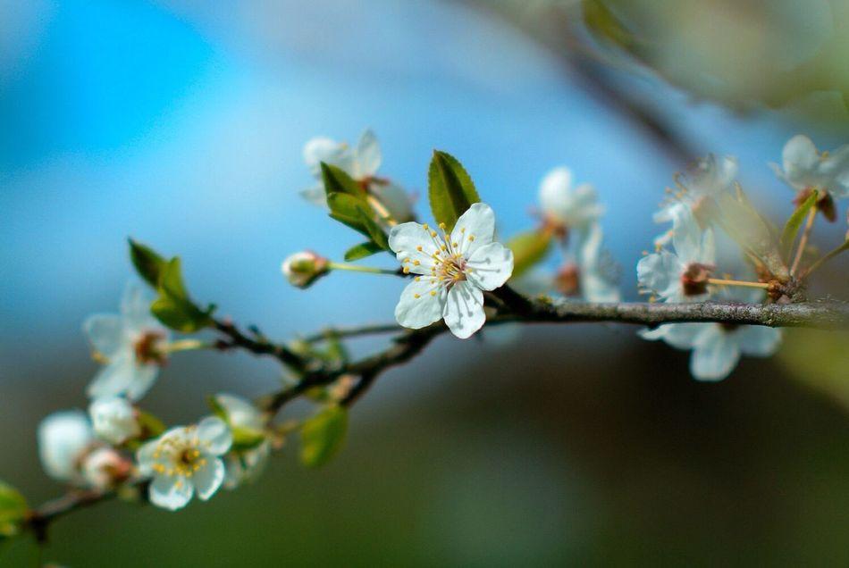 Spring Nikon 1 V1 Nikkor 50mm F1.4