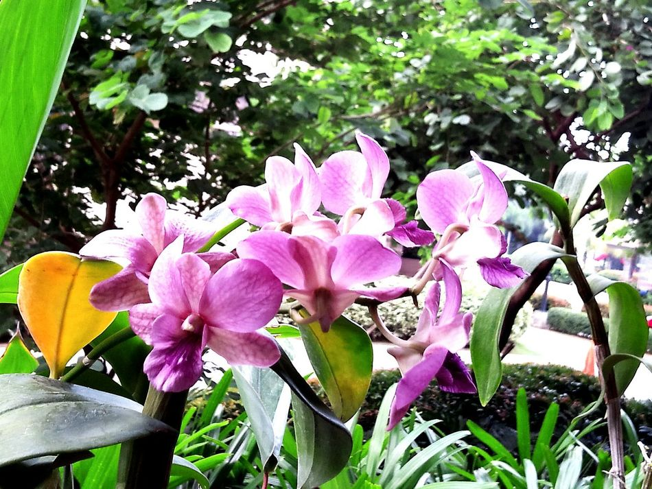 Orchids Yellow Purple Laspinas Relaxing Appreciating