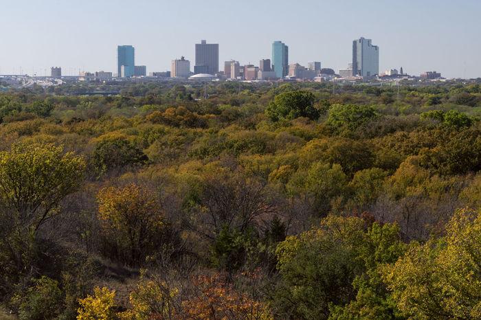 Skyline of Fort Worth, Texas over colorful, Autumn leaves Autumn Autumn Colors Autumn Leaves Buildings City Fall Fort Worth Horizon Skyline First Eyeem Photo