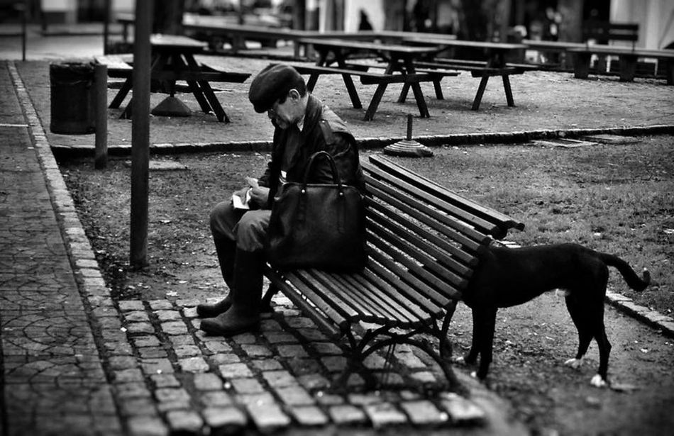 Dog Perro plaza Urbanas blancoynegro oldman Bancodeplaza