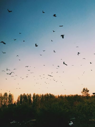 Avian Beauty In Nature Bird Blue Cloud Day Flock Of Birds Flying Growth Idyllic Landscape Low Angle View Mid-air Nature No People Outdoors Scenics Sky Tranquil Scene Tranquility Wildlife