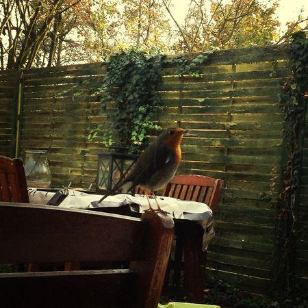 Autumn Colors Cute bird in my back yard ☺️ Birds Cute