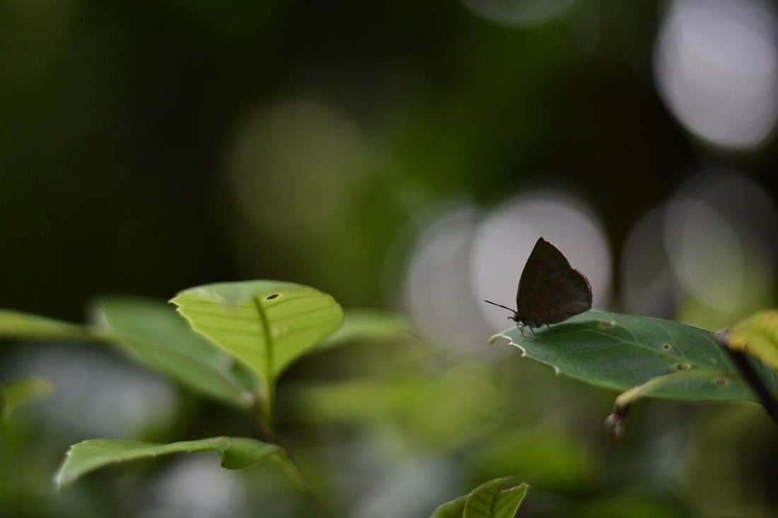 シルエット silhouette Hello World Taking Photos Nature Butterfly Eye4photography  Silhouette