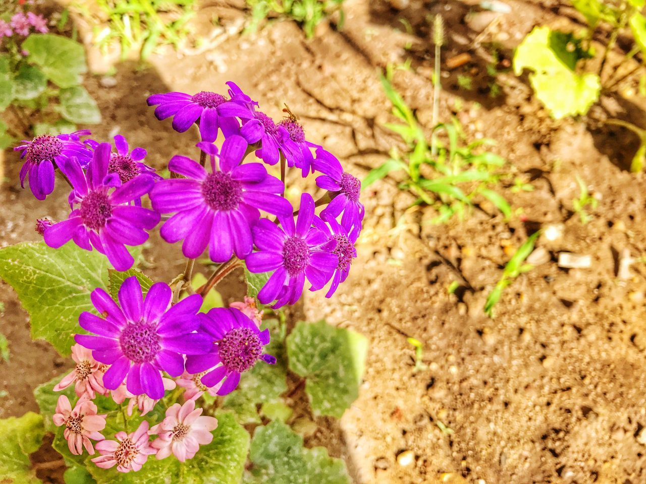 Nature Flower Head Purple Plant Beauty In Nature Outdoors