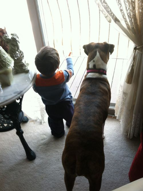 Child And Dog Dog Domestic Animals Lifestyles Looking Looking Out Of The Window Looking Out The Window One Animal One Person Pets Real People Window