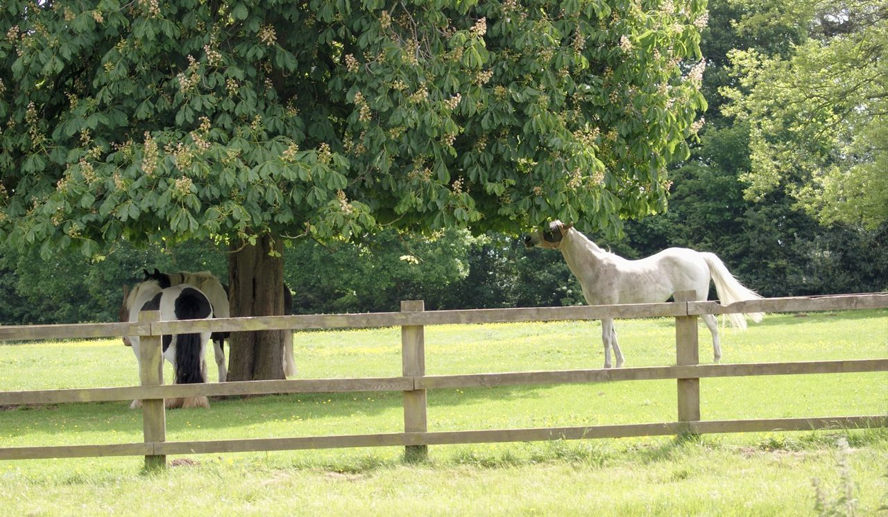 Two Horses Tree Domestic Animals Animal Themes Mammal Paddock Green Color Horse Standing Nature Grass Field Day Outdoors Growth No People Livestock Grazing Beauty In Nature Full Length