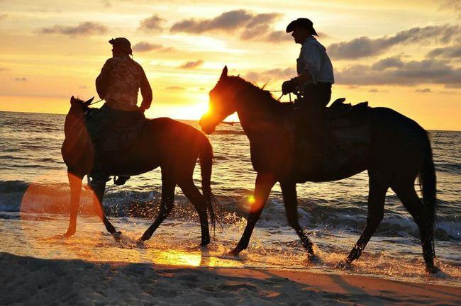 Holidays Sun Colors Baltic Sea Summer Waves Sky Baltic Sunset Sea Horses Beach