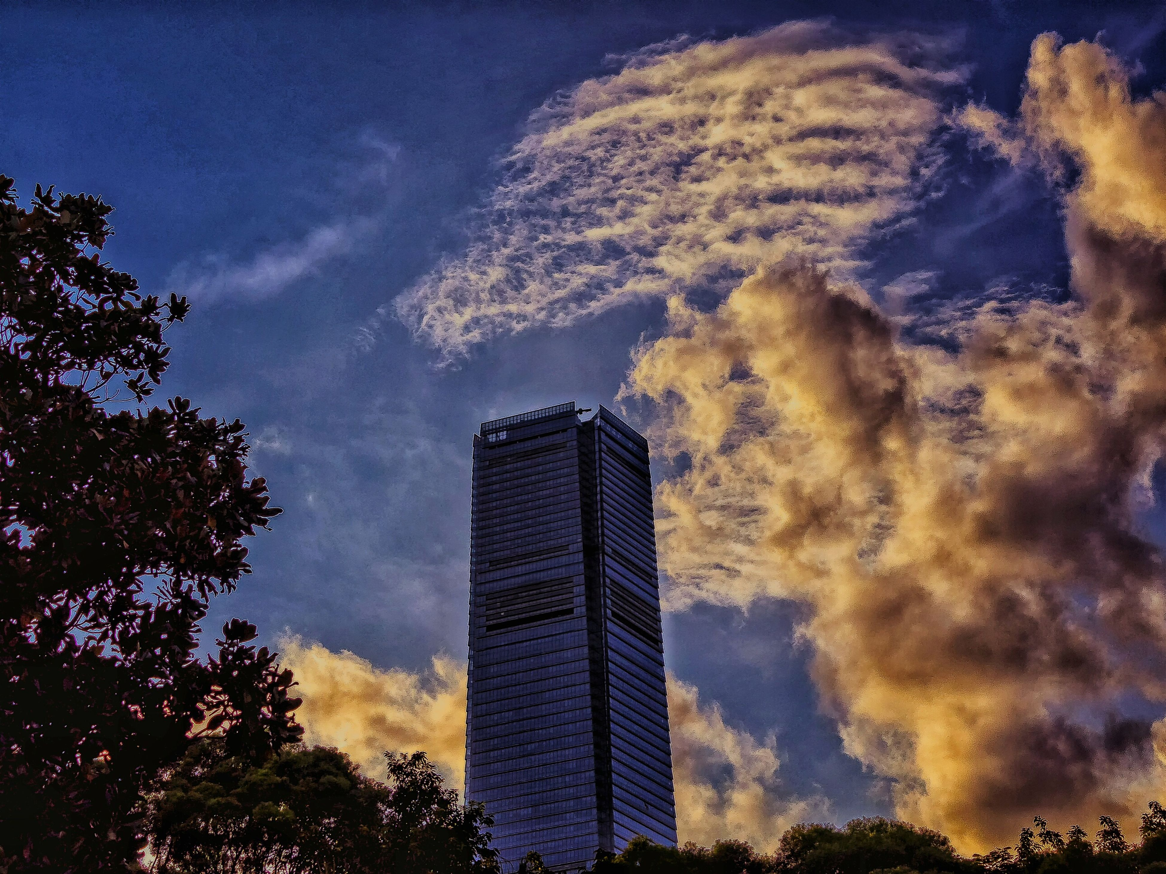 tree, sky, low angle view, architecture, building exterior, tall - high, skyscraper, built structure, city, silhouette, branch, tower, growth, cloud, cloud - sky, modern, office building, outdoors, tall, building story, city life, no people, scenics, beauty in nature, outline