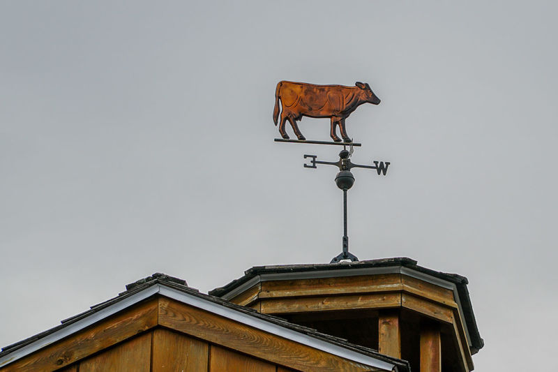 Tourist Attraction  Travel Animal Themes Architecture Banderole Building Exterior Built Structure Canada Coast To Coast Clear Sky Day Direction Guidance Low Angle View No People One Animal Outdoors Sky Tourism Tourist Destination Travel Destinations Weather Vane Weathervane