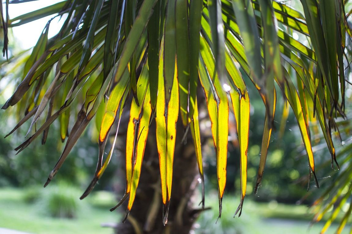 Green Green Color Growth Leaf Leaves Nature Palm Palm Tree Palm Tree Leaves