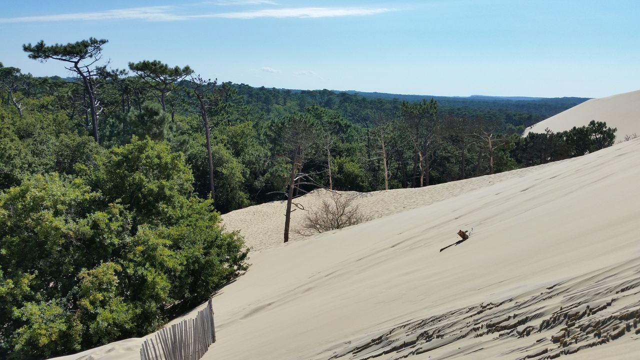 Cloud Desertification Dune Forest Nature Scenics Sky Travel Destinations Traveling Tree