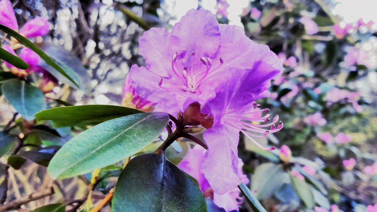 flower, fragility, beauty in nature, growth, petal, nature, freshness, flower head, day, focus on foreground, leaf, no people, close-up, outdoors, plant, pink color, blooming