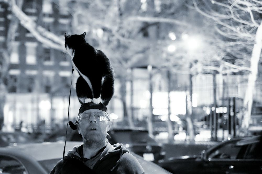 I'm seeing things... Cat Street Photography Humans Of New York Balance Open Edit