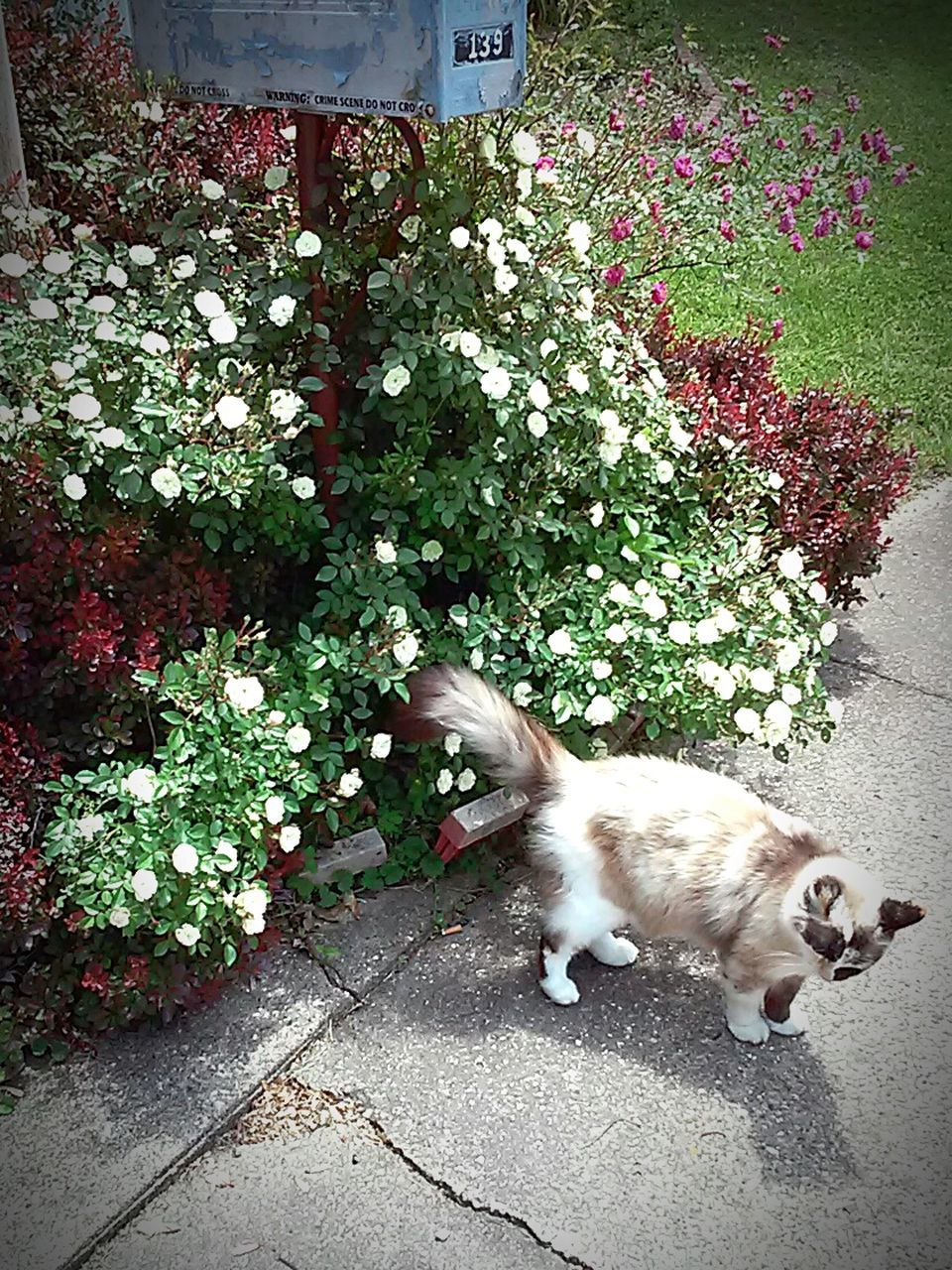 pets, domestic animals, animal themes, one animal, plant, mammal, domestic cat, high angle view, outdoors, day, no people, flower, nature, growth, dog, feline