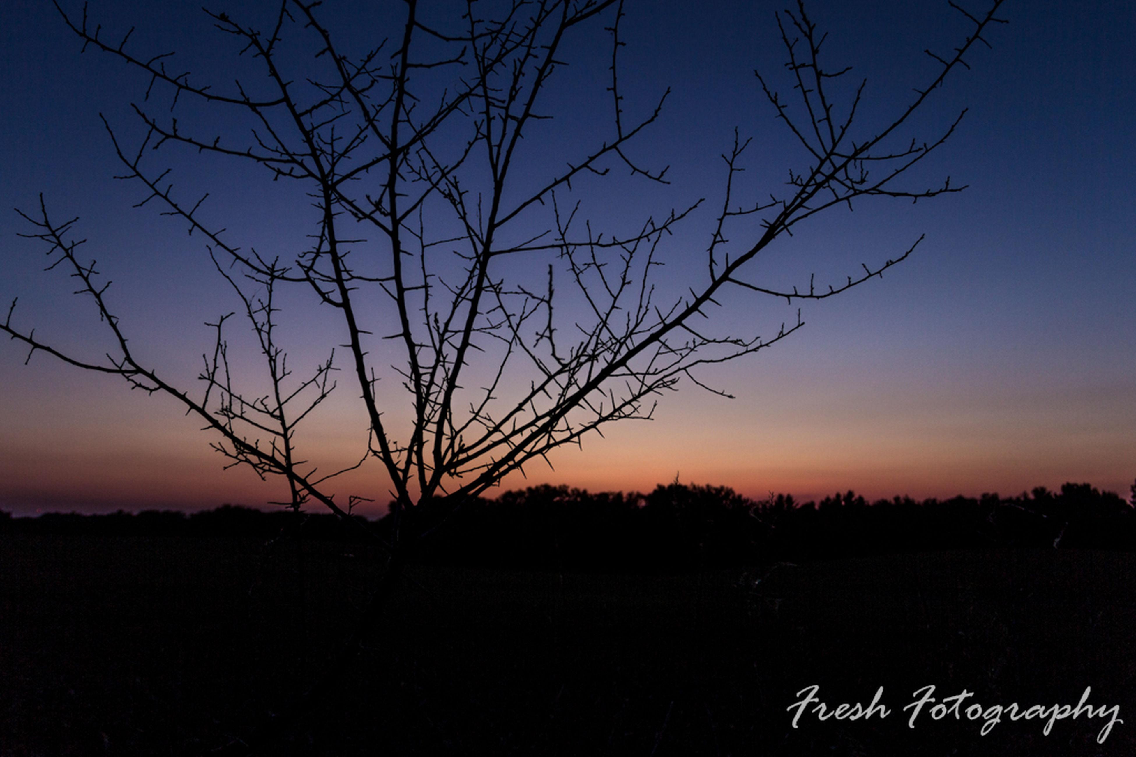 bare tree, silhouette, sunset, tranquility, tree, tranquil scene, scenics, branch, landscape, beauty in nature, nature, sky, idyllic, non-urban scene, no people, outdoors, non urban scene, remote, majestic, dark, outline, growth, horizon over land, rural scene, blue