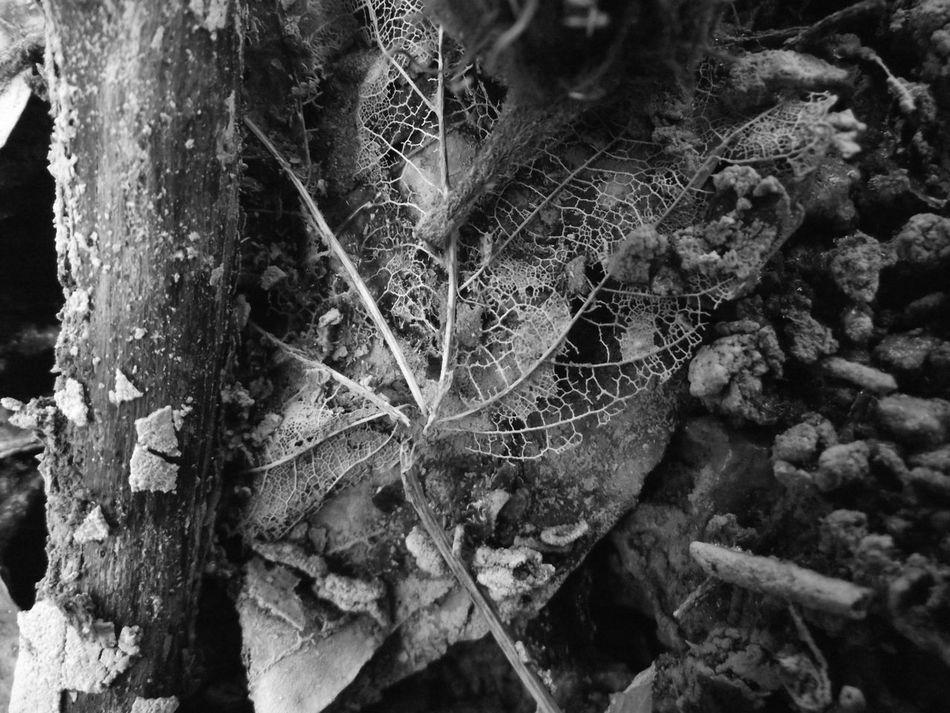 Beauty In Nature Blackandwhite Bükk Close-up Hungary Leaf Nature No People