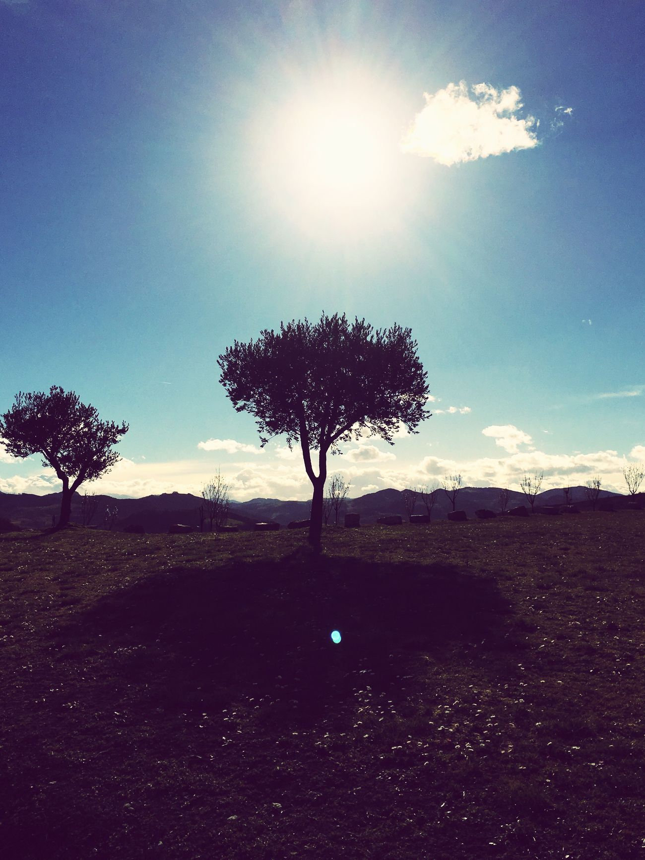 Landscape Tree Tranquil Scene Tranquility Solitude Nature Beauty In Nature Majestic Scenics Sky Lone Sun Sunlight Outdoors No People Day