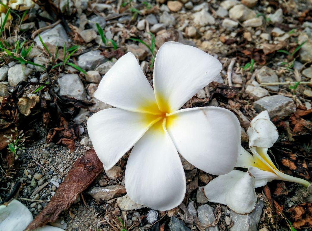 Flowers Flower Head Bouquet Beauty In Nature Cut Flowers Blossom Flower Pattern Flower Nature Single Flower