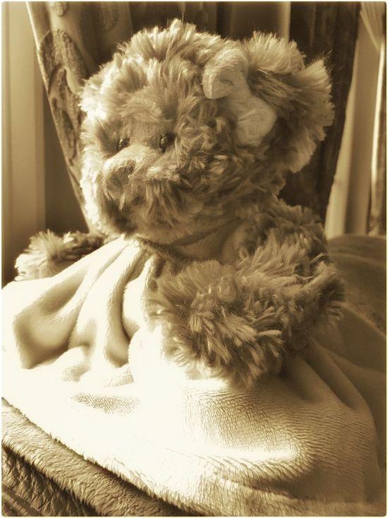 Teddybear Home Sweet Home Light And Shadow Window Toys Bear Animals Old Days