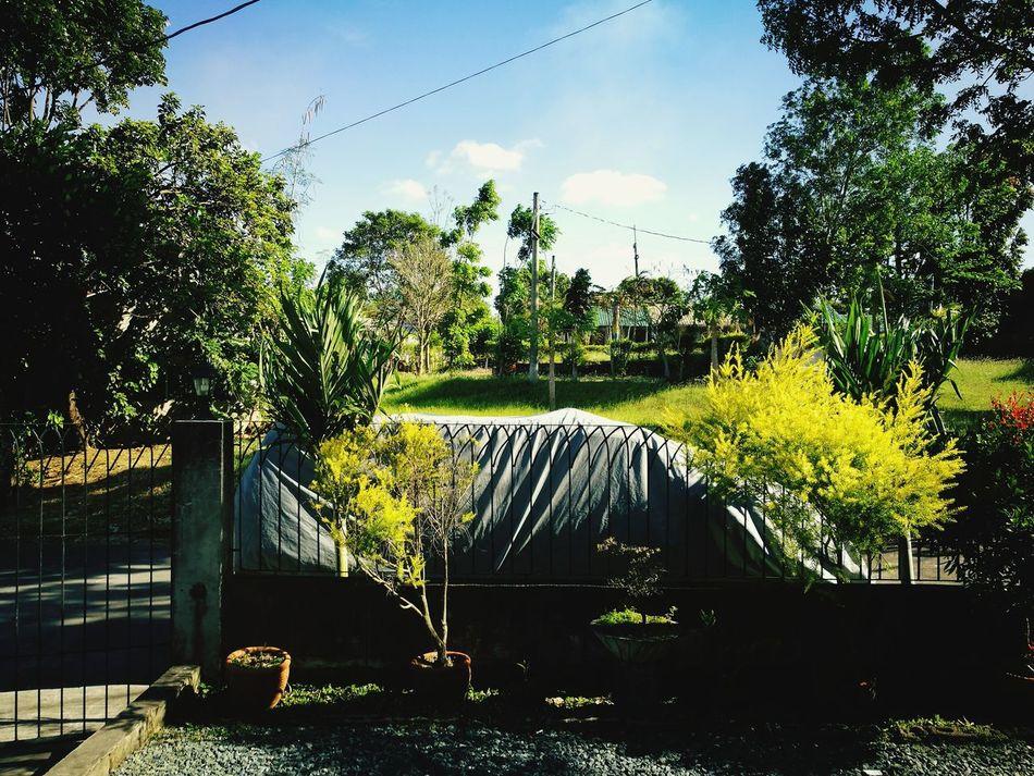 Back to basics Tree Outdoors Nature Sky Day No People Basic Newtothis
