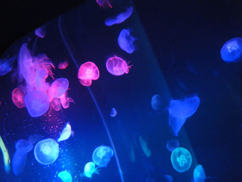Blue Close-up Color Enhanced Enjoyment Event Fragility Glowing Illuminated Lighting Equipment Nature Nightlife No People Party - Social Event Pink Color Softness Swimming Vibrant Color Water