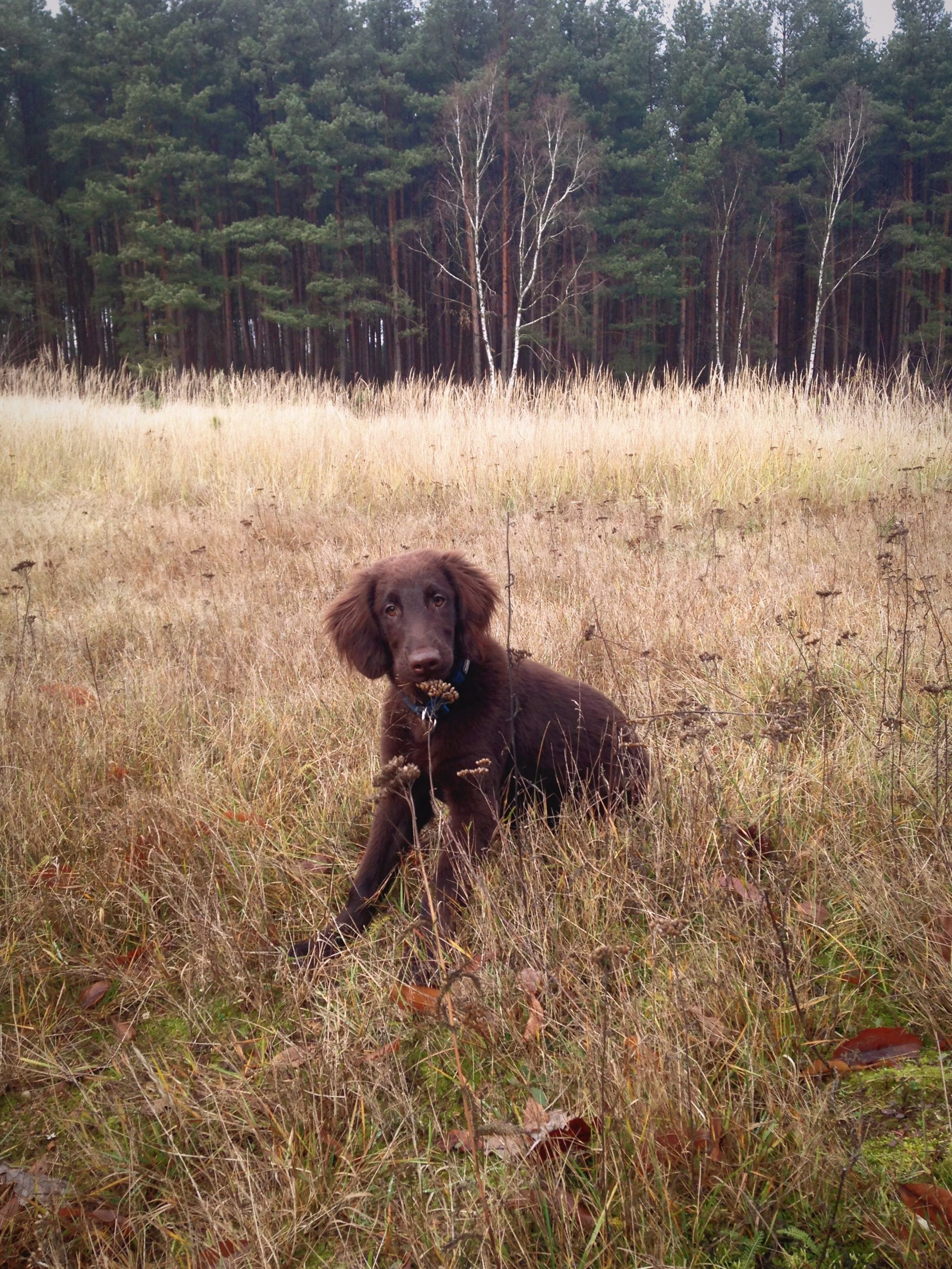 animal themes, one animal, pets, field, domestic animals, grass, mammal, dog, nature, no people, day, tree, outdoors, portrait