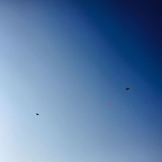 Like those kites afloat in the air, our wishes are sent over the airspace.