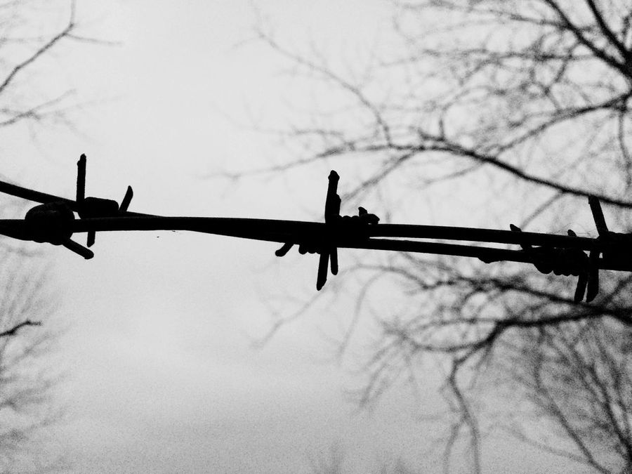 IPhoneography Sky Black&white Skyporn Barbed Wire Barbedwire Barbed Wire Wednesday Black And White Blackandwhite Black & White