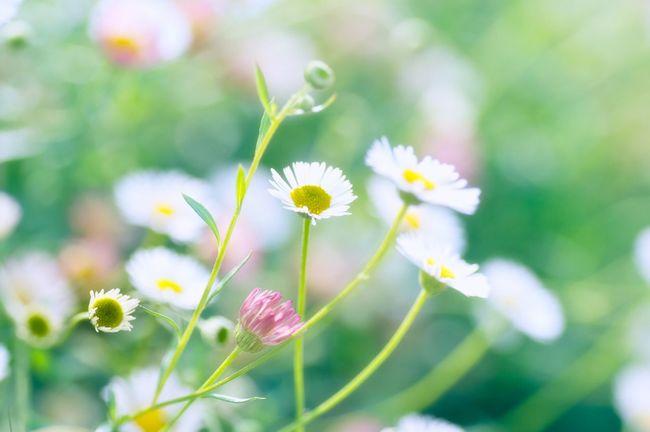 Flowerpower Nature カメラ女子風 all are not my sort though.