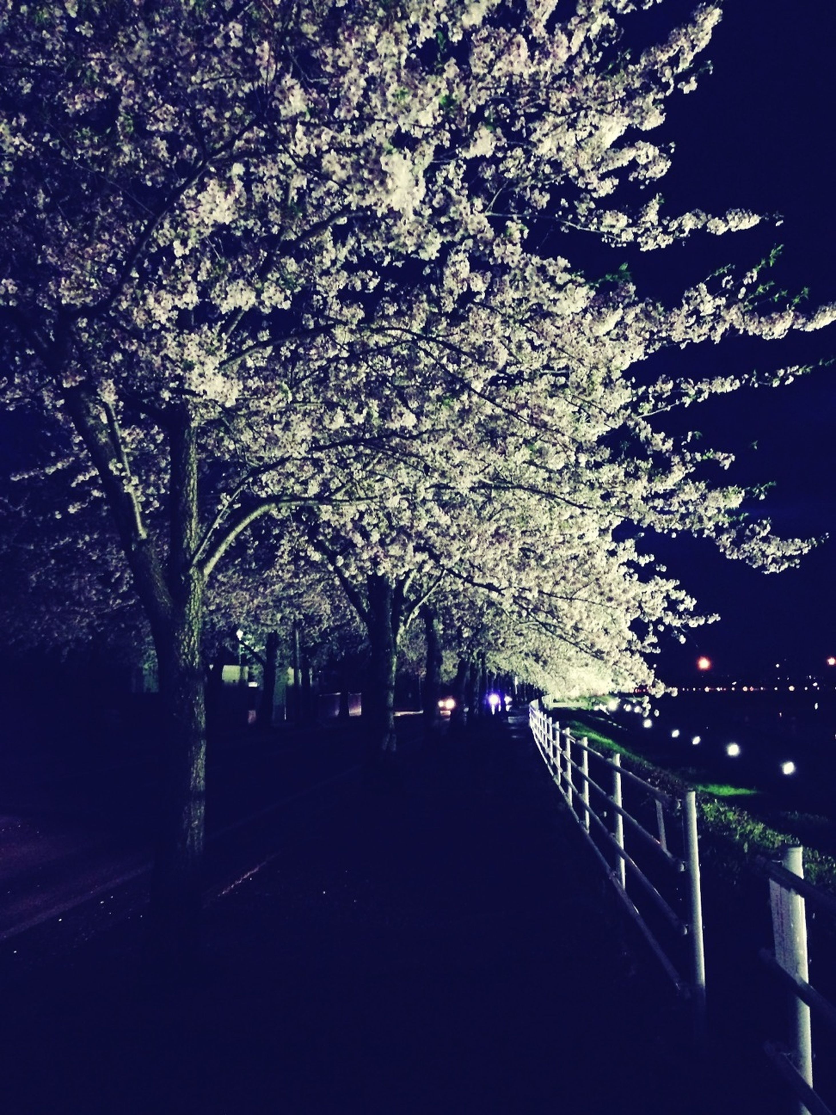 night, tree, illuminated, branch, built structure, lighting equipment, railing, growth, clear sky, architecture, street light, nature, sky, bare tree, outdoors, building exterior, low angle view, tranquility, beauty in nature, park - man made space
