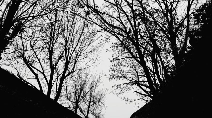Tree Low Angle View Nature Sky Bare Tree Branch Outdoors From My Point Of View Autumn 2016 December 2016 Showcase December The Places I've Been And The Things I've Seen The Places ı've Been Today Beauty In Nature Hugging A Tree Silhouette TreePorn Tree Blackandwhite Monochrome