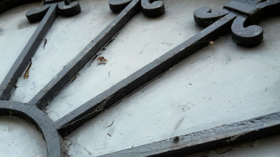 Arch Rundbogen Schmiedeeisen Schmiedekunst Wrought Iron Close-up No People Metallic Street Photography Decoracion Detail Few Colors