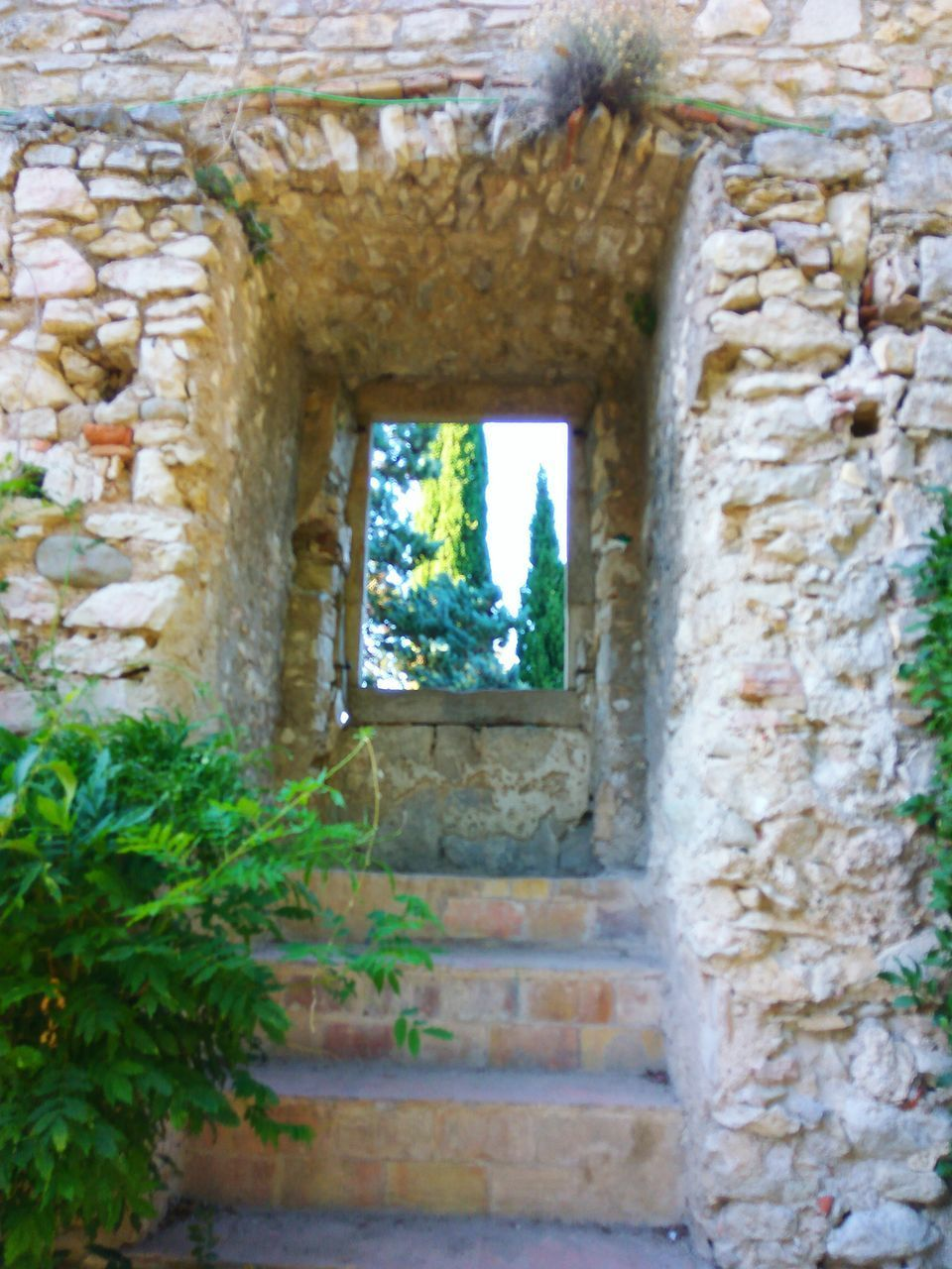 architecture, built structure, history, window, day, plant, no people, building exterior, tree, nature, outdoors, close-up