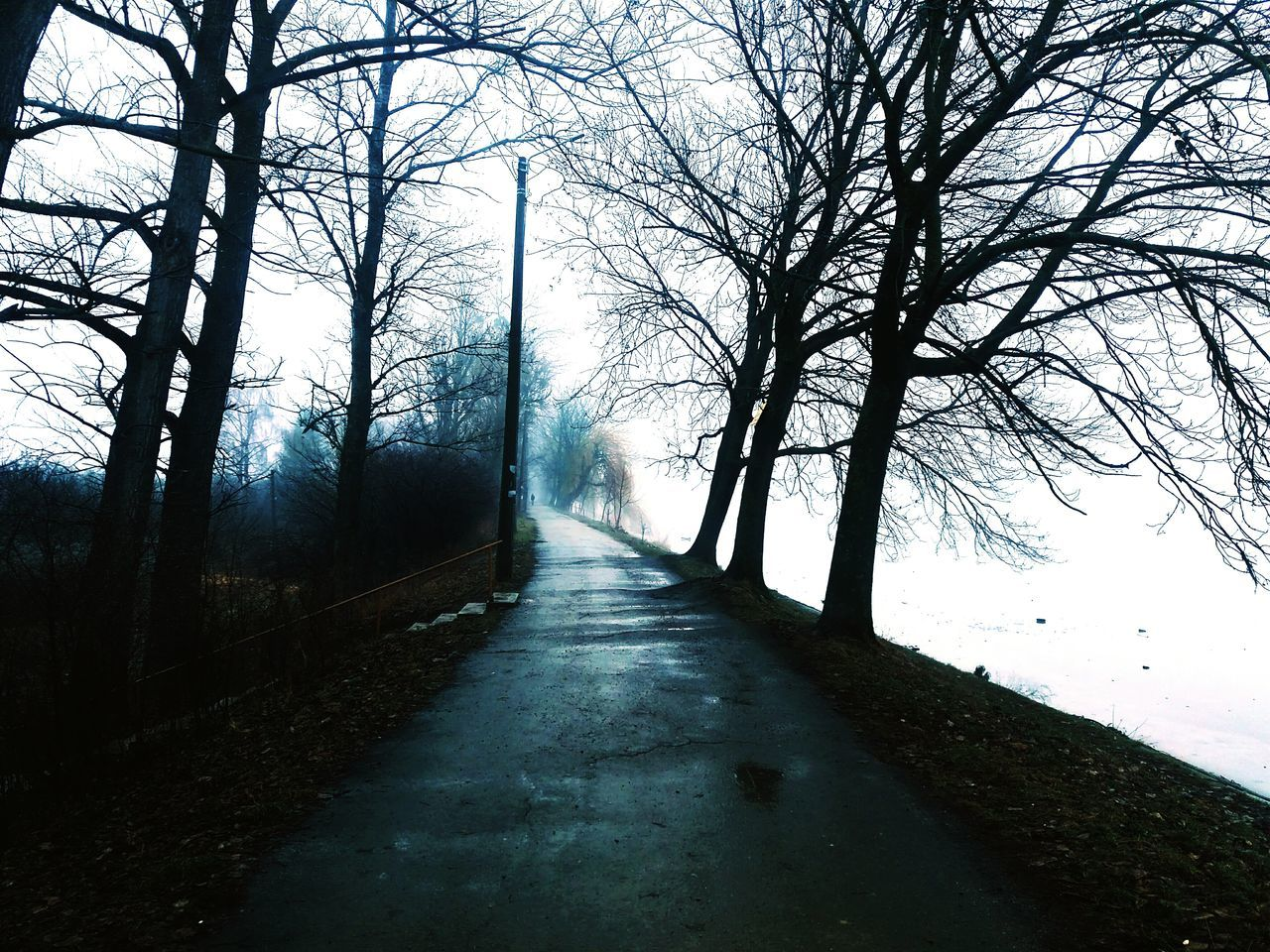 Nature Rainy Weather Tree Beauty In Nature The Way Forward Sky Day Outdoors Non-urban Scene No People Tranquility Landscape Scenics