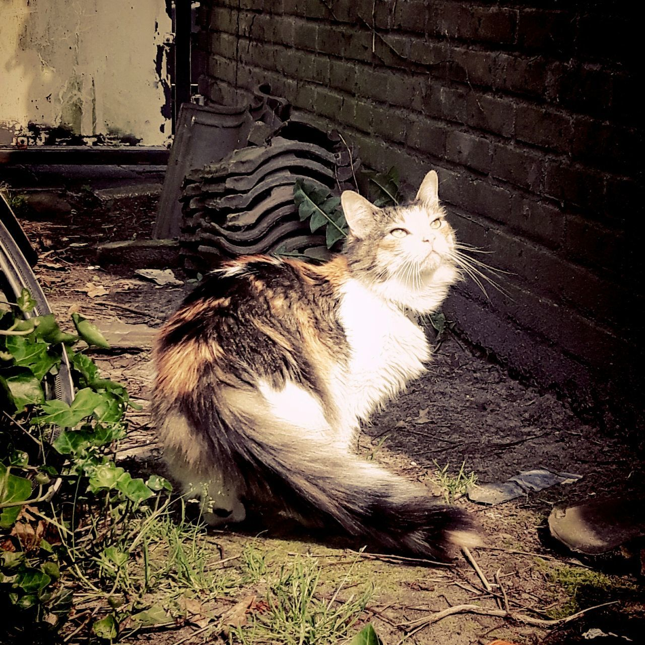 Domestic Cat Animal Themes Pets One Animal Cat Feline Domestic Animals Mammal Day No People Outdoors Sitting Nature Close-up Photograph Sun Discovering Fun Cat Lovers Live For The Story Cats Creativity Cats Of EyeEm Photography Traveling