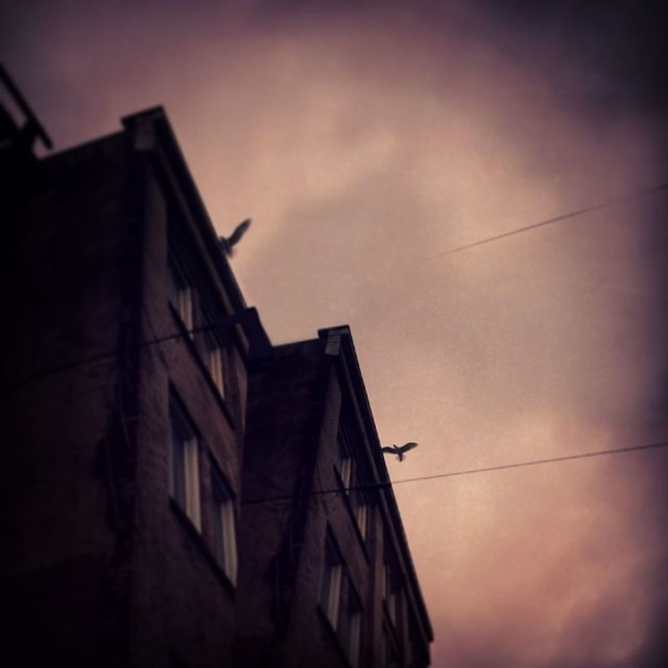 One bird, of two bird-minds Phoneography Instagram Vancouver Luckydouble-x