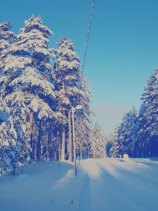 Cold Winter ❄⛄ WinterinSweden Sweden Inthewoods Snow ❄ WoodLand -17° Winter2016