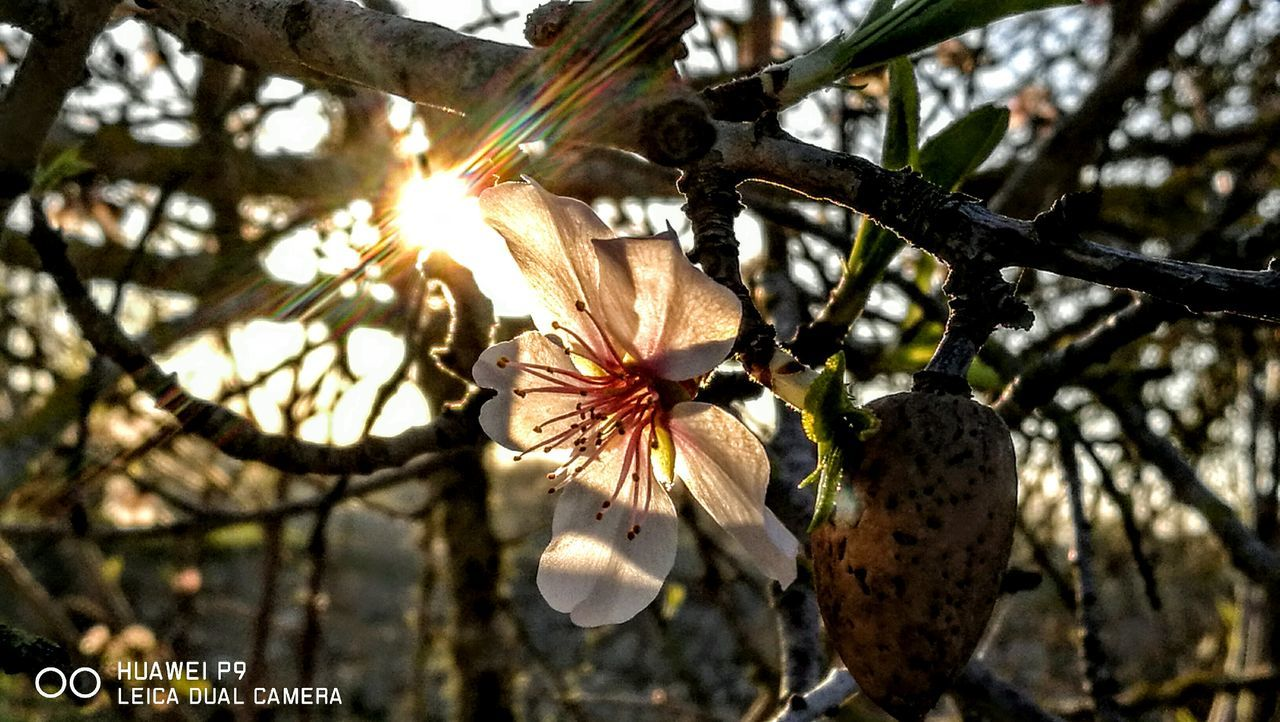 Sunlight is panting beautiful... Tree Low Angle View Nature Growth Sunlight No People Branch Close-up Day Outdoors Beauty In Nature Fragility Nostalgic Scene GetbetterwithAlex PalmaDiMaiorca Originalpicture
