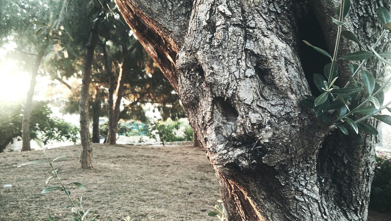 Tree Face Faces On Trees Nature