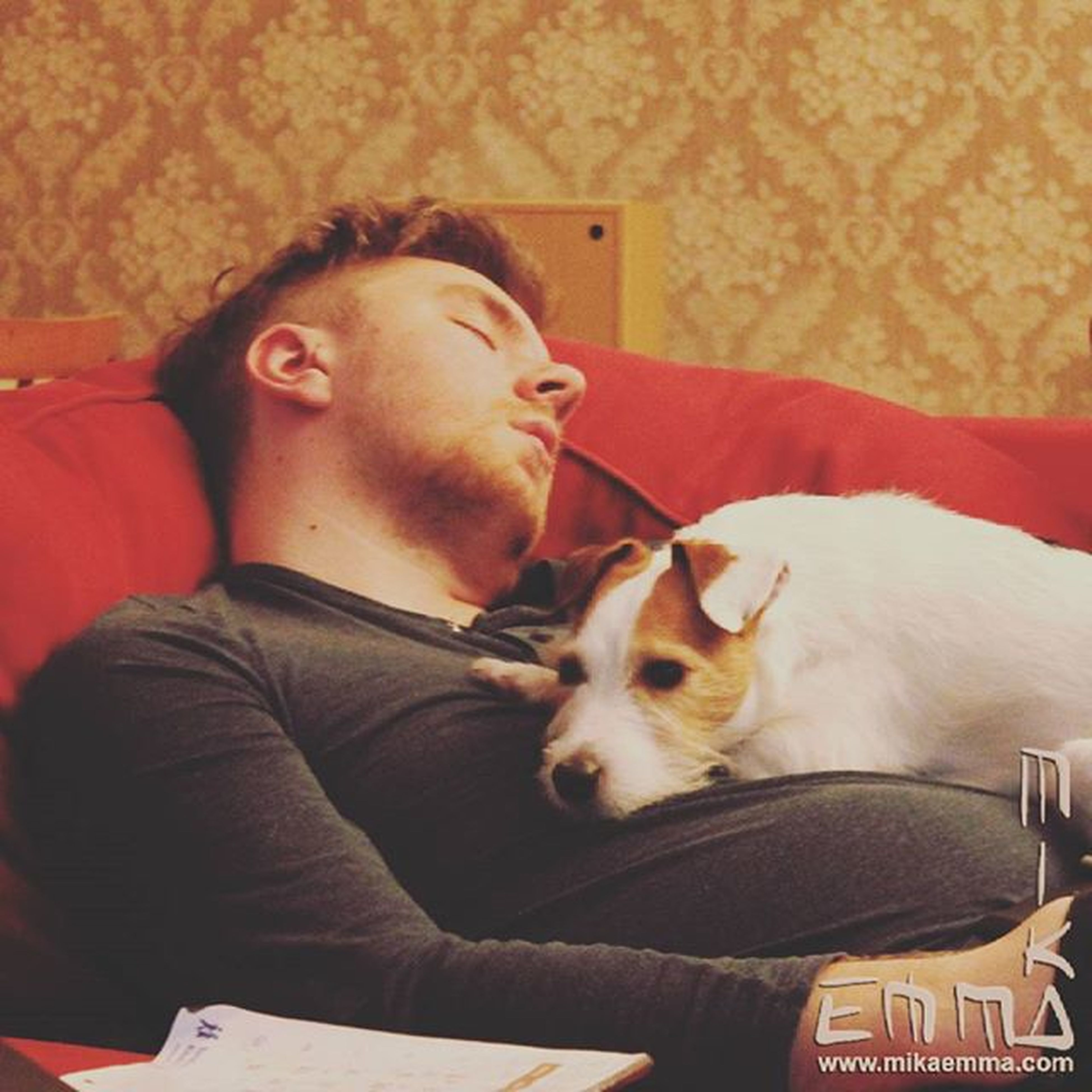 domestic animals, pets, animal themes, mammal, indoors, portrait, looking at camera, one animal, person, young adult, togetherness, relaxation, lifestyles, dog, home interior, young men, bonding, sitting