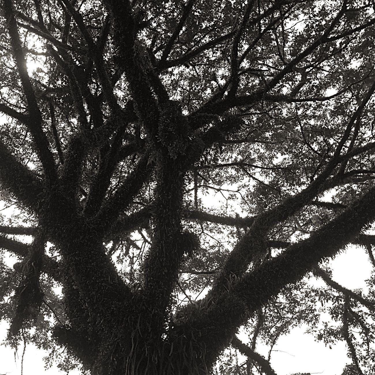 alone... Starting A Trip EyeEm Eye4photography  EyeEmMalaysia EyeEm Nature Lover EyeEm Gallery Trees Nature Blackandwhite Black And White