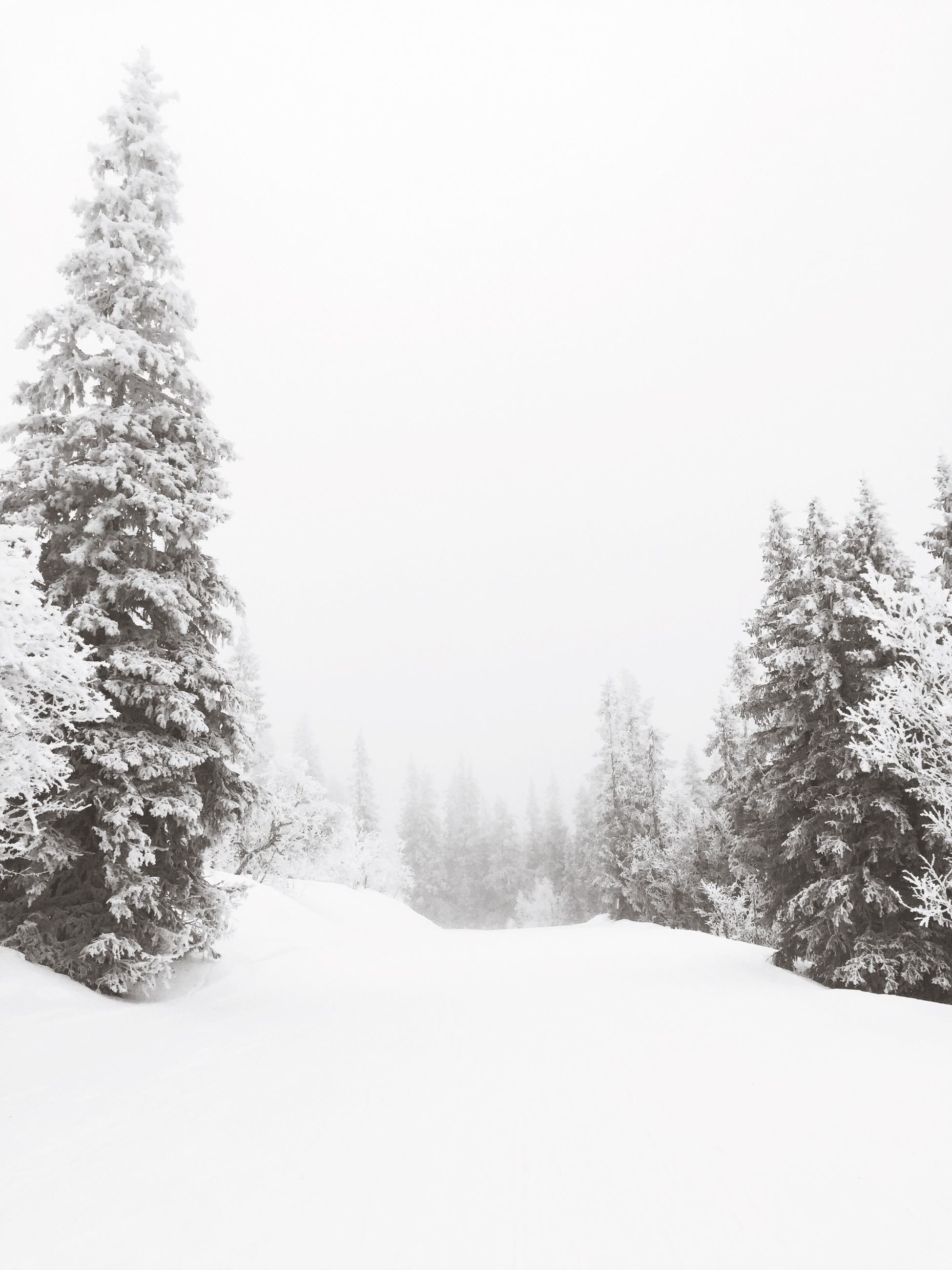 tree, snow, winter, cold temperature, nature, beauty in nature, tranquility, tranquil scene, weather, scenics, day, no people, landscape, covering, outdoors, clear sky, cold, sky