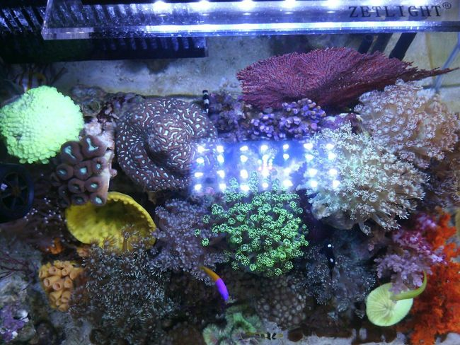 tampak atas Reeftank Saltwatertank Aquarium Indonesia_allshots Akuarium Laut Akuarium Marinelife Allshots All_shots Hobbies