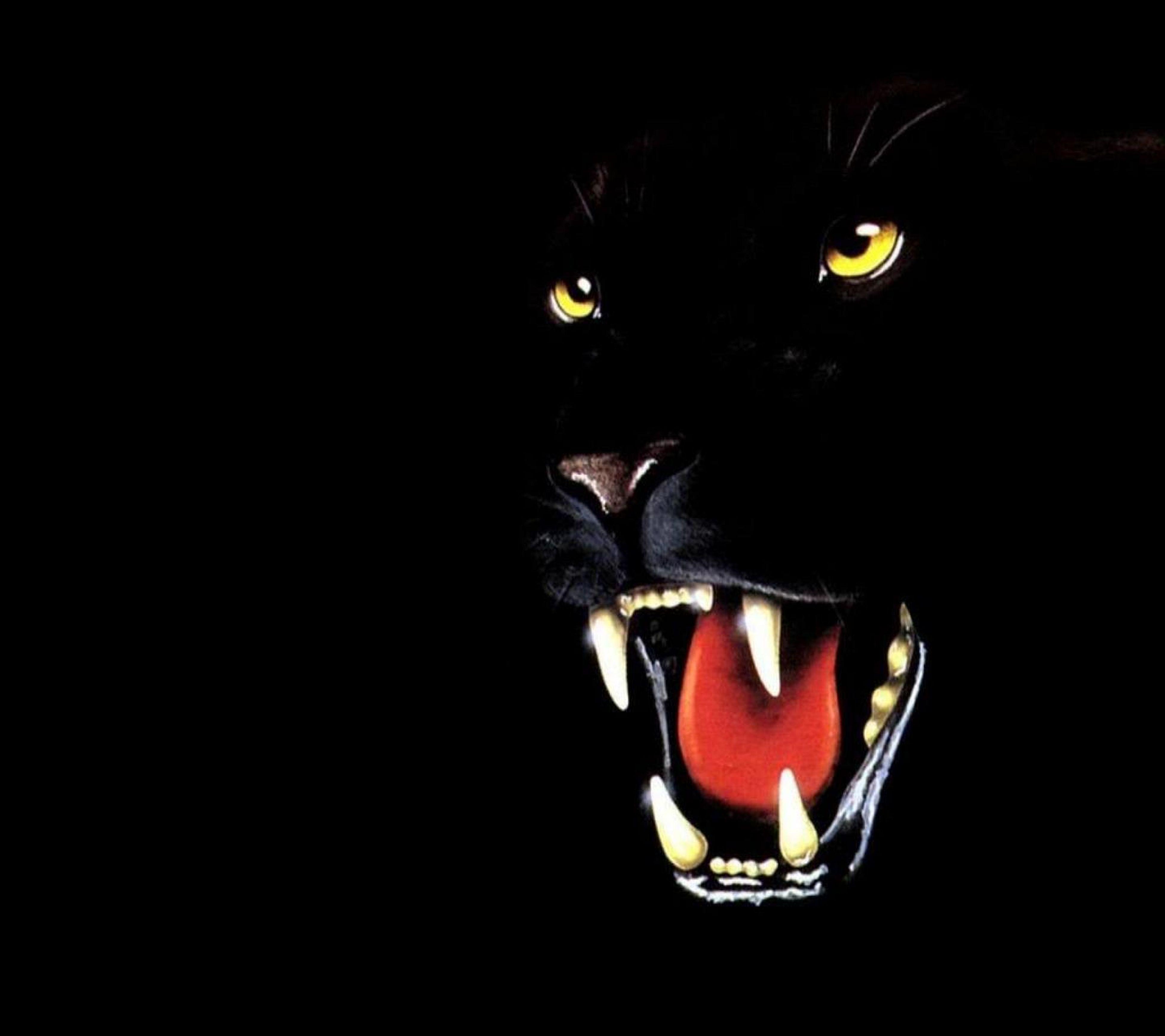 black background, studio shot, indoors, close-up, copy space, animal themes, pets, night, one animal, dark, cat, domestic cat, domestic animals, black color, darkroom, still life, no people, illuminated, feline, looking at camera