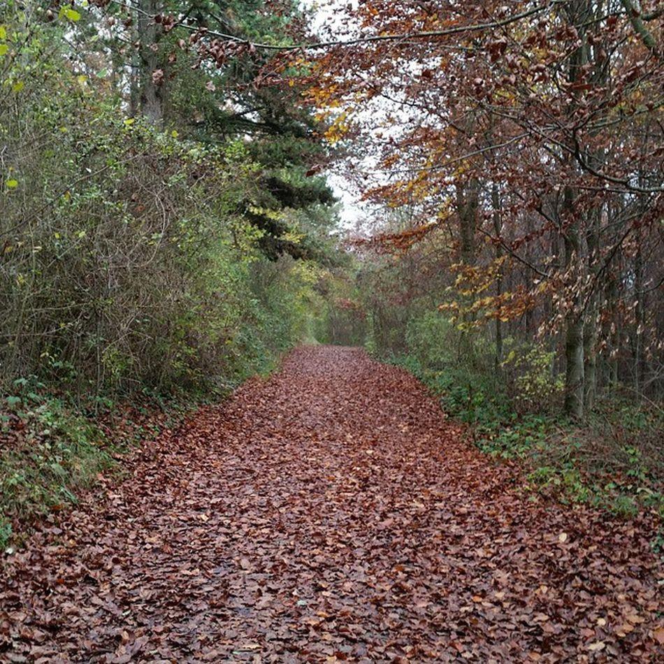 Balade Imprevu Chemindesdames Tree way nature