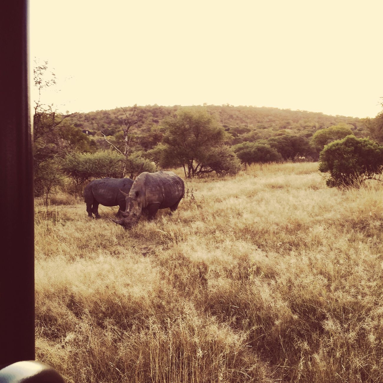 South Africa Africa Safari Rinhoceros Amazing View Iphonography Amazing_captures IPhoneography Beautiful Southafrica