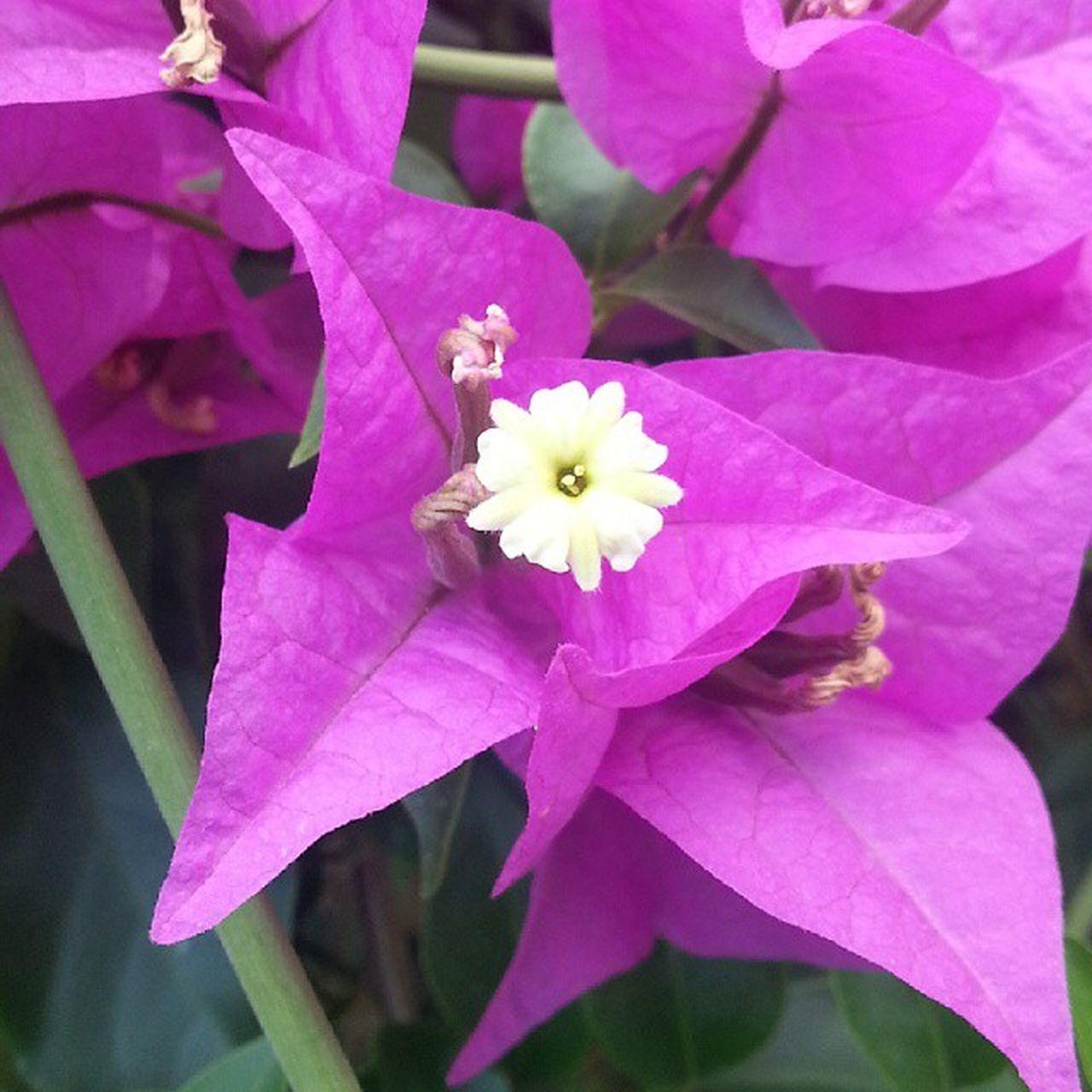 Flower Bornava Izmir