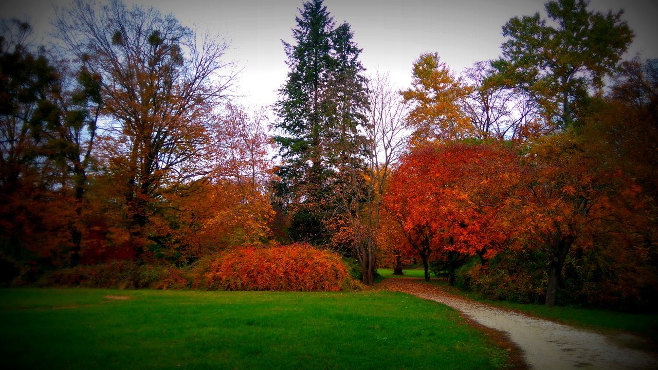 tree, autumn, change, growth, nature, beauty in nature, tranquility, orange color, tranquil scene, outdoors, no people, leaf, day, scenics, landscape, grass, sky
